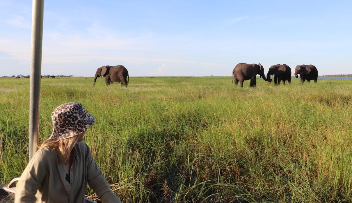 Elephants and Felicity_Chobe River_Botswana_credit Katrina Holden
